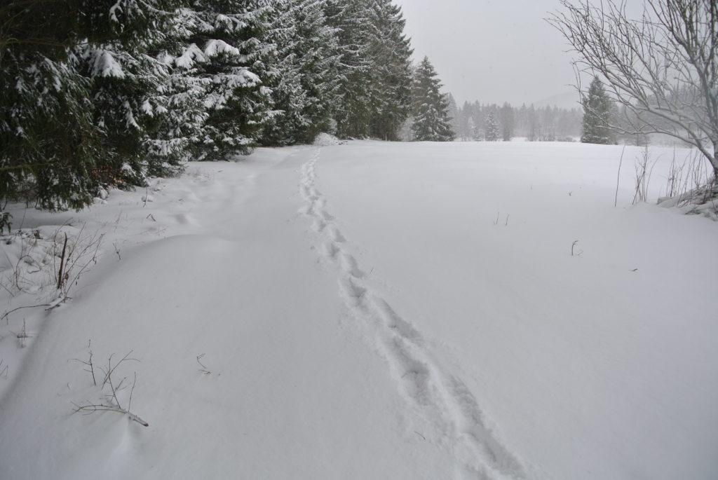 Winterschutz Badetonne